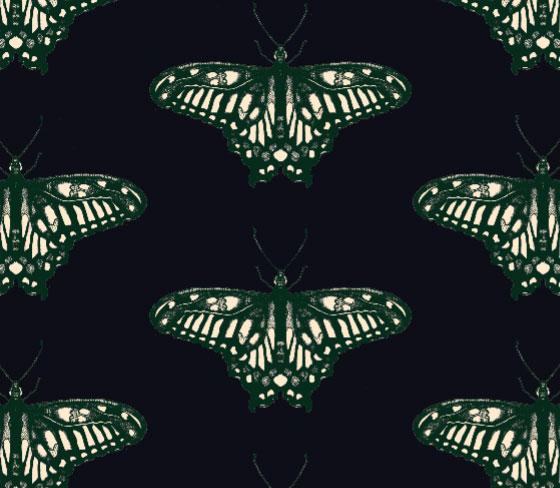 butterflycolour3