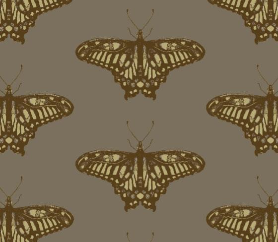 butterflycolour4