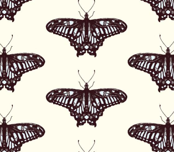 butterflycolour5