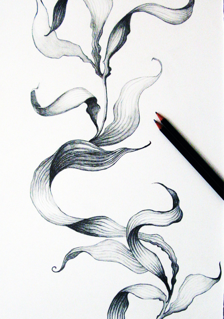 seaweed_drawing