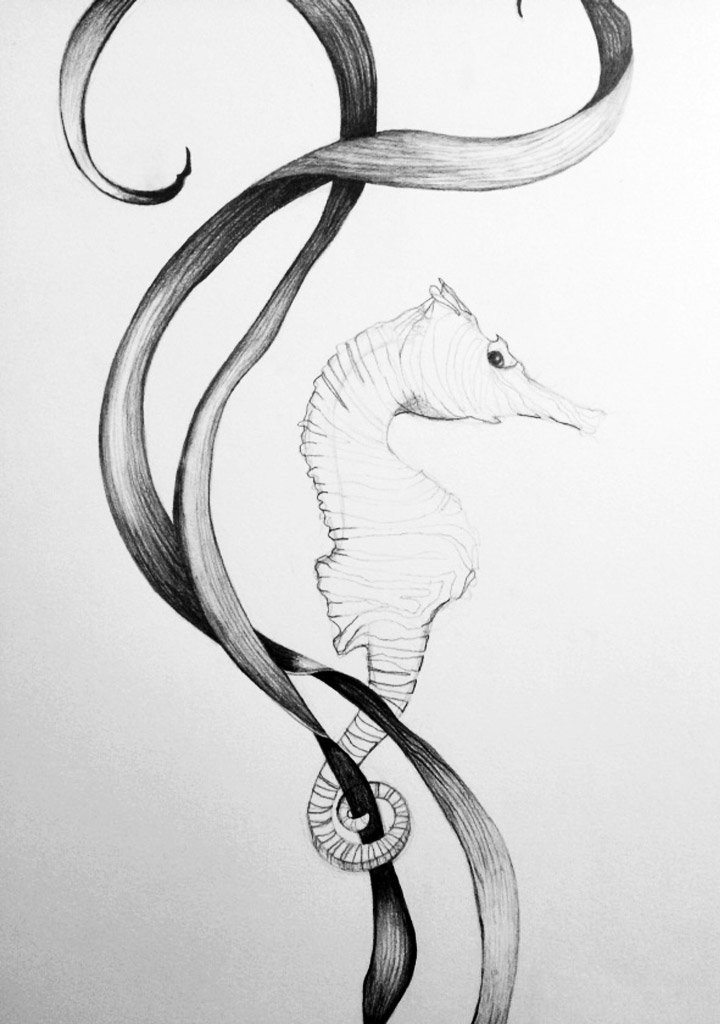seaweed and seahorse illustration - graphite