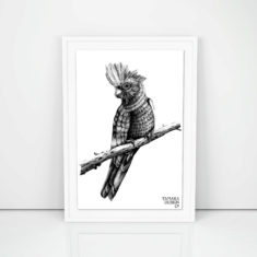 Giclee Art Print of Galah Cockatoo one of the most common birds from the cockatoo family.