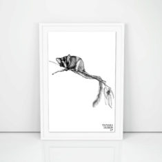 Giclée art print with leadbeater possum illustration printed on on 300gsm cotton rag with archival pigment inks